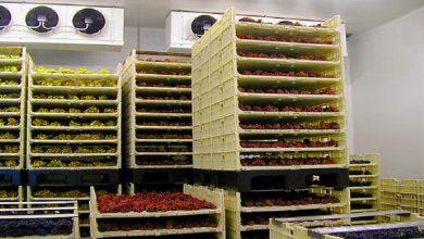 Solutii pentru depozitarea fructelor