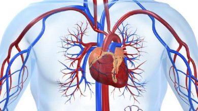 Inima si sistemul circulator