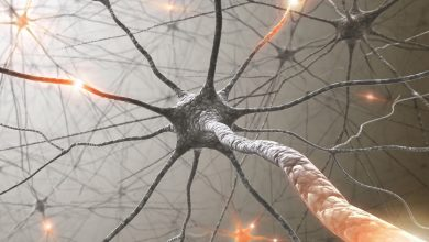 Neuronii – ce sunt si cum functioneaza